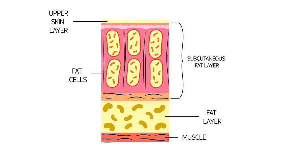 Fat under the skin
