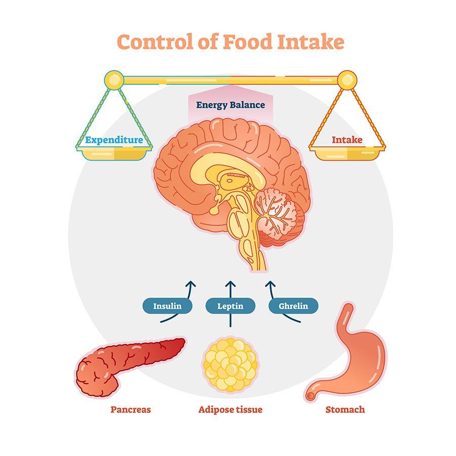 Still Felling Hungry Leptin Response