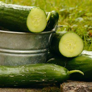 Easy Keto Snacks Cucumbers