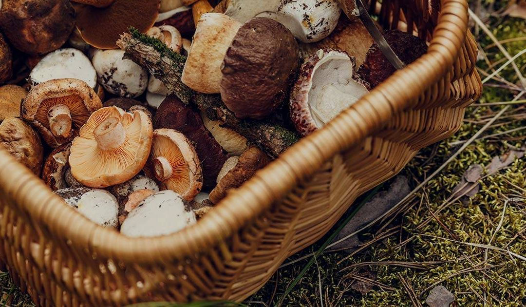 The Health Benefits of Mushrooms [A Definitive Guide]